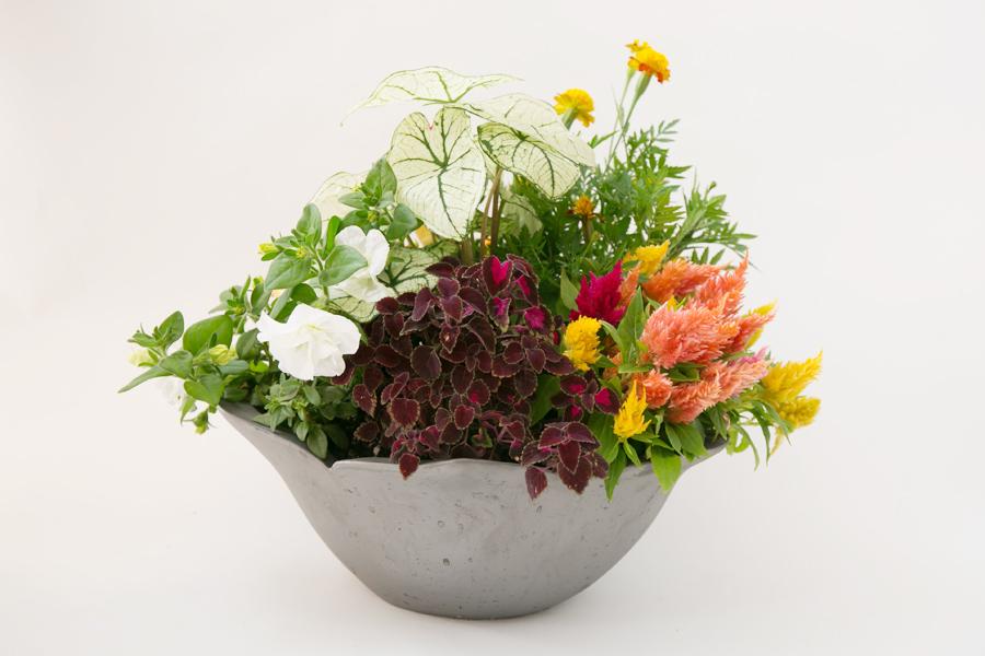 伝統のいぶし器季節の花苗寄せ植え鉢