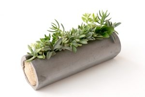 伝統のいぶし器多肉植物の寄せ植え、筒鉢